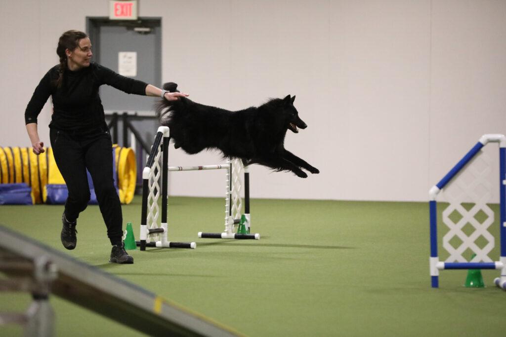 Sarah Low training her sheepdog Bruce